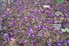 έδαφος λουλουδιών Στοκ Φωτογραφία