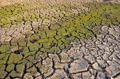 Έδαφος ξηρασίας άγονη γη η ανασκόπηση ράγισε την ξηρά &g ραγισμένο πρότυπο λάσπης Στοκ Εικόνες