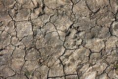 έδαφος ξηρασίας Στοκ Εικόνα