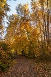 Έδαφος Knome Στοκ Εικόνες