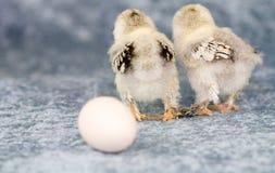 έκανε το αυγό πηγαίνει όπο&up Στοκ Εικόνες