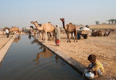 Έκθεση καμηλών Pushkar, Rajasthan, Ινδία στοκ εικόνα με δικαίωμα ελεύθερης χρήσης
