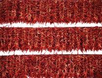 Έκθεση κόκκινων πιπεριών Στοκ Εικόνες
