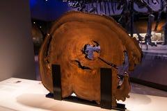 Έκθεση μουσείων στο κούτσουρο δέντρων Στοκ εικόνα με δικαίωμα ελεύθερης χρήσης