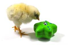 Έκπληξη κοτόπουλου «s Στοκ φωτογραφία με δικαίωμα ελεύθερης χρήσης
