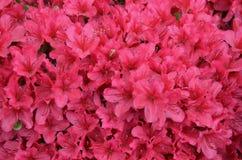 Έκρηξη των λουλουδιών Στοκ Φωτογραφίες