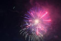 Έκρηξη των πυροτεχνημάτων στα ιώδη και ρόδινα λουλούδια νυχτερινού ουρανού λαμπρά Στοκ Φωτογραφίες