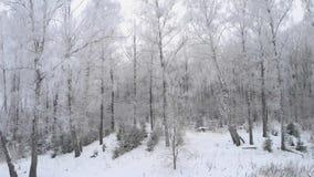 Έκταση με τον κηφήνα πέρα από το χειμερινό δάσος απόθεμα βίντεο