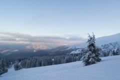 Έλατα και οι Μπους χειμερινών τοπίων στο χιόνι Στοκ εικόνες με δικαίωμα ελεύθερης χρήσης