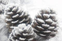 έλατο κώνων Χριστουγέννων Στοκ φωτογραφία με δικαίωμα ελεύθερης χρήσης