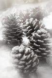 έλατο κώνων Χριστουγέννων Στοκ Φωτογραφία