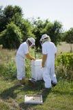 έλεγχος μελισσών Στοκ φωτογραφίες με δικαίωμα ελεύθερης χρήσης