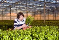 Έλεγχος των φυτών Στοκ φωτογραφία με δικαίωμα ελεύθερης χρήσης