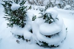 Έλικας χιονιού σε ένα δέντρο Στοκ Εικόνα