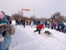 έλκηθρο αγώνα σκυλιών Στοκ φωτογραφία με δικαίωμα ελεύθερης χρήσης