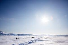 έλκηθρο αποστολής σκυ&lamb Στοκ Εικόνες