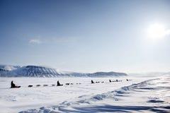 έλκηθρο αποστολής σκυ&lamb Στοκ εικόνα με δικαίωμα ελεύθερης χρήσης