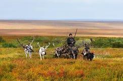 Έλκηθρο μολύβδων νομάδων herder με το καυσόξυλο σε ένα στρατόπεδο Στοκ Εικόνες
