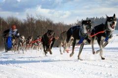 έλκηθρο σκυλιών Στοκ φωτογραφίες με δικαίωμα ελεύθερης χρήσης