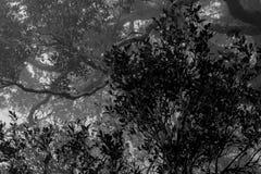 Έλλειψη και άσπρη σκηνή των πυκνών δέντρων και των κλάδων στο δάσος με την άσπρη υδρονέφωση στην ομιχλώδη ημέρα Μάταιος και απελπ στοκ φωτογραφία