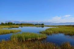 Έλος βουνών Στοκ Φωτογραφίες
