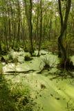 Έλος και δάσος Στοκ Φωτογραφίες