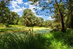 Έλος στα δάση. στοκ φωτογραφία με δικαίωμα ελεύθερης χρήσης