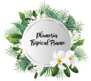 Έμβλημα κύκλων με τα φύλλα φοινικών με το λουλούδι plumeria Στοκ Εικόνα