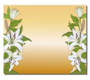 Έμβλημα με κάθετα σύνορα των άσπρων κρίνων σε ένα χρυσό υπόβαθρο r ελεύθερη απεικόνιση δικαιώματος