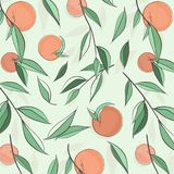 Έμβλημα ροδάκινων θερινών φρούτων Διανυσματική απεικόνιση σκίτσων Εξωτικό σχέδιο νεκταρινιών φύλλων Τυπωμένη ύλη χρώματος κρητιδο Στοκ Εικόνες