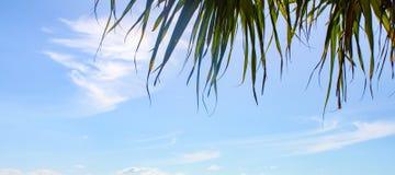 Έμβλημα του μπλε ουρανού με τα wispy σύννεφα και τα φύλλα φοινικών στην κορυφή - δωμάτιο για το αντίγραφο στοκ φωτογραφίες
