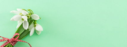 Έμβλημα άνοιξη Φρέσκια ανθοδέσμη snowdrops Στοκ φωτογραφία με δικαίωμα ελεύθερης χρήσης