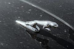 Έμβλημα ιαγουάρων στην κουκούλα του αυτοκινήτου Στοκ εικόνα με δικαίωμα ελεύθερης χρήσης