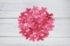 Έμβλημα κύκλων που γίνεται από τα ρόδινα και κόκκινα λουλούδια Στοκ εικόνες με δικαίωμα ελεύθερης χρήσης