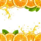 Έμβλημα με τα φρέσκα πορτοκάλια ελεύθερη απεικόνιση δικαιώματος
