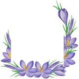 Έμβλημα λουλουδιών άνοιξη των κρόκων αρχαίο watercolor εγγράφου ανασκόπησης σκοτεινό κίτρινο Στοκ εικόνα με δικαίωμα ελεύθερης χρήσης