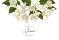 Έμβλημα λουλουδιών της Jasmine Στοκ Φωτογραφίες