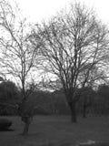 Έναρξη του χειμώνα στοκ φωτογραφίες με δικαίωμα ελεύθερης χρήσης