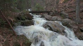 Ένας άγριος κολπίσκος στο βαυαρικό δάσος απόθεμα βίντεο