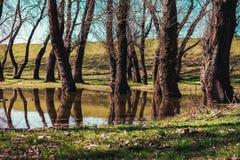 ένας άλλος κόσμος μαγικός κόσμος Δέντρα στο καθάρισμα από το νερό Στοκ Εικόνες