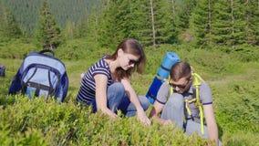 Ένας άνδρας και μια γυναίκα συλλέγουν τα μούρα των άγριων βακκινίων στα βουνά Έννοια ταξιδιού και περιπέτειας απόθεμα βίντεο
