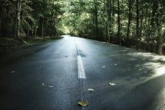 Ένας άνεμος δρόμος ασφάλτου στη μέση του πρόσθιου μέρους στοκ εικόνες