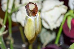 Ένας άσπρος οφθαλμός λουλουδιών μεταξύ των λουλουδιών Στοκ Φωτογραφίες