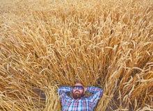 Ένας αγρότης ή ένα άτριχο hipster βρίσκεται στον τομέα του σίτου στοκ φωτογραφίες