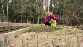 Ένας αγρότης γυναικών στο φυτικό κήπο καλλιέργησε το σκόρδο απόθεμα βίντεο