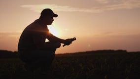 Ένας αγρότης εργάζεται στον τομέα στο ηλιοβασίλεμα Μελετώντας τους βλαστούς εγκαταστάσεων, που χρησιμοποιούν μια ταμπλέτα στοκ εικόνες