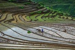 Ένας αγρότης με τους βούβαλους νερού στον τομέα στοκ φωτογραφίες με δικαίωμα ελεύθερης χρήσης