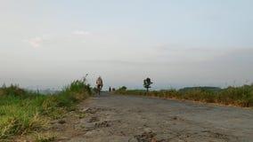 Ένας αγρότης οδηγά ένα ποδήλατο στους τομείς ρυζιού απόθεμα βίντεο