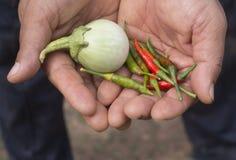 Ένας αγρότης που κρατά τα φρέσκα κόκκινα και πράσινα πιπέρια τσίλι και ένα πράσινο ε στοκ φωτογραφία με δικαίωμα ελεύθερης χρήσης