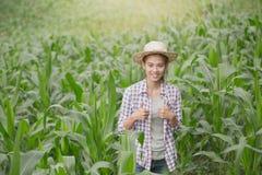 Ένας αγρότης που στέκεται cornfield του στο ηλιοβασίλεμα που προσέχει τη συγκομιδή του στοκ εικόνα